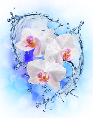 white orchids: White orchids on the water splash. Close up Stock Photo
