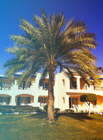 el sheikh: Palms and bungalow in hotel in Sharm el Sheikh, Egypt Editorial