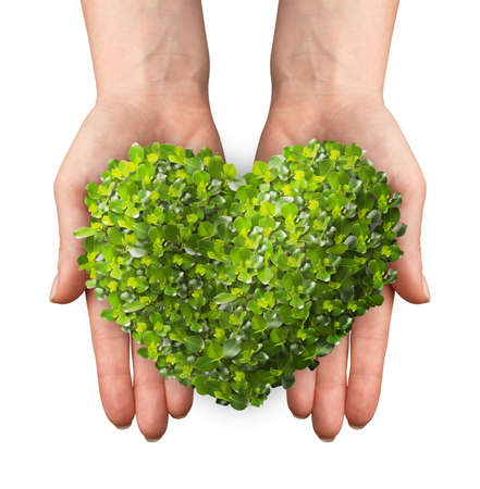 shaped hands: hands holding a heart shaped green leafs. isolated on white