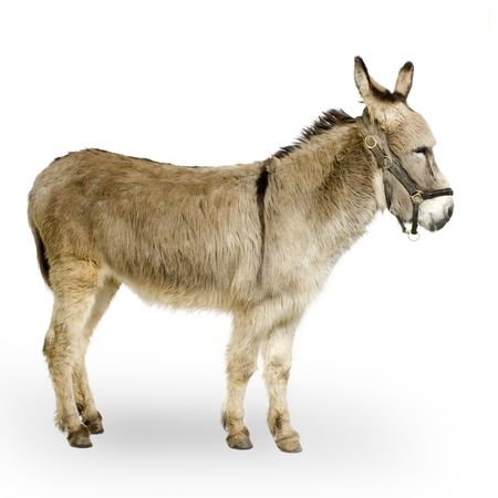 donkey in front of a white background photo