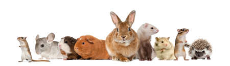 rabbits: Group of pets, isolated on white