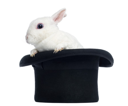 Mini rex rabbit goint out of a top hat, isolated on white photo