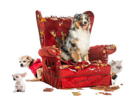Group of pets on a destroyed armchair, isolated on white photo