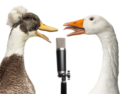 duck: Duck and goose singing into a microphone, isolated on white