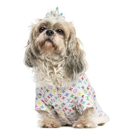 Dressed-up Shih Tzu wearing a diadem sitting, 4 years old, isolated on white photo