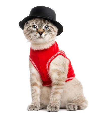 dressed up: Siamese with red top and top hat, sitting, looking at the camera, 5 months old, isolated on white
