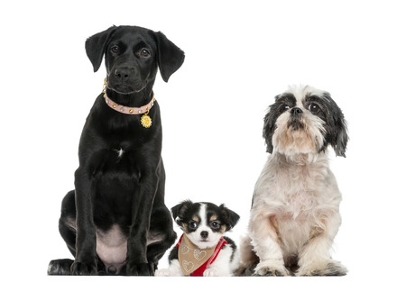 dogs sitting: Group of dogs sitting together, isolated on white