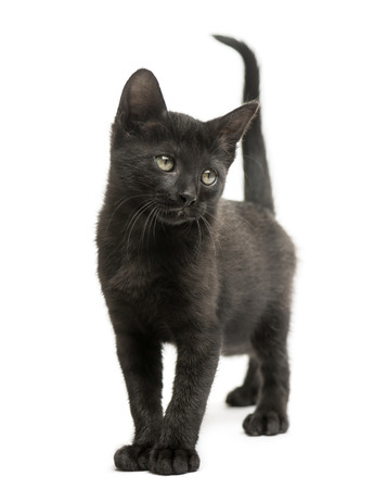Black kitten standing, looking away, 2 months old, isolated on white Stock Photo
