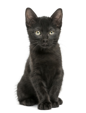 Black kitten sitting, looking at the camera, 2 months old, isolated on white photo
