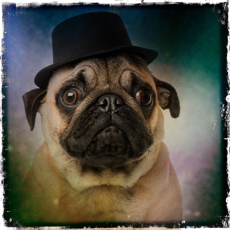 Pug wearing a top hat, on a grunge colored background photo