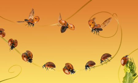 coccinellidae: Composition of a cloud of ladybirds on a orange gradient background