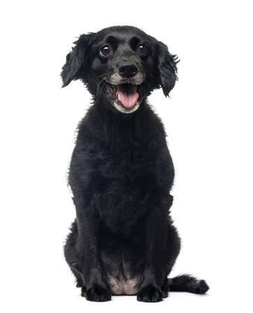11 years: Front view of a cheerful Crossbreed dog sitting, panting, 11 years old, isolated on white