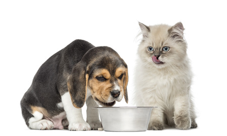 puppy and kitten sitting in front of a dog bowl, isolated on white photo