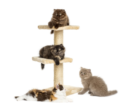cat playing: Kittens playing on a cat tree