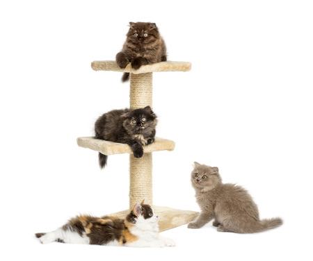 gato jugando: Los gatitos que juegan en un árbol del gato Foto de archivo