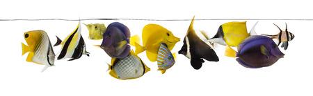 school of fish: School of salt water fish