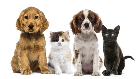 puppy and kitten: Group of kittens and dogs Stock Photo