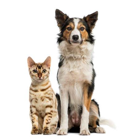 Katze und Hund zusammen sitzen und mit Blick in die Kamera