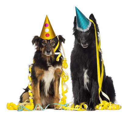 Two depressives dogs wearing party hat and sitting in serpentines  photo