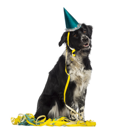 Border Collie wearing a party hat and sitting in serpentines photo