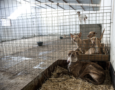 Abandoned dogs in a cage photo