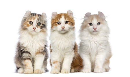 large group of animals: Group of Kittens