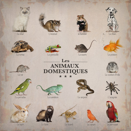 poster of pets in french photo