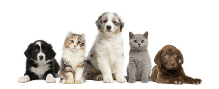 large group of animals: Group of pets: kitten and puppy on a raw