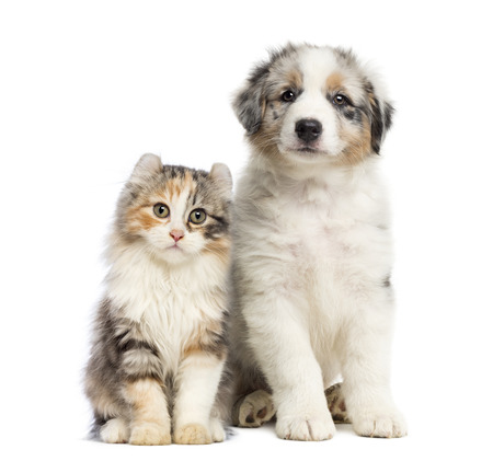 Kitten and puppy sitting, isolated on white photo