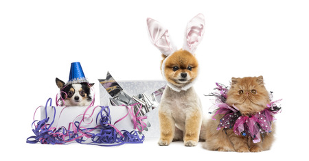 Dogs and cat partying photo