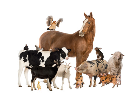 Group of farm animals photo