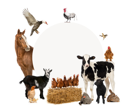 animales de granja: Grupo de animales del campo que rodea a un cartel en blanco Foto de archivo