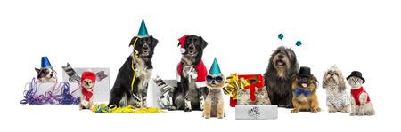 Hunde und eine Katze Party