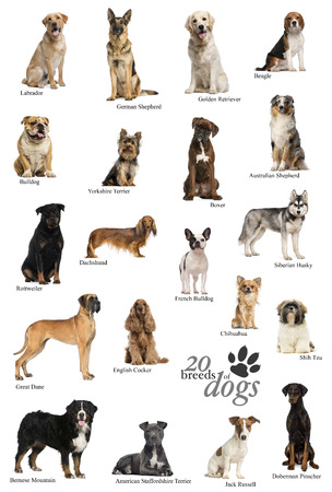 Dog breeds poster in English photo