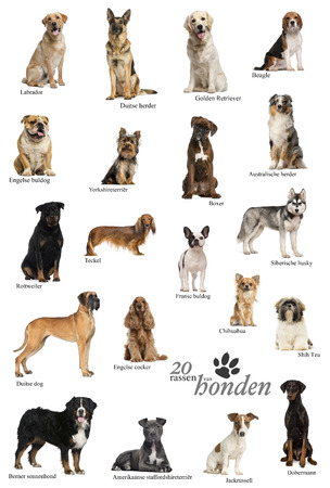 Dog breeds poster in Dutch