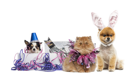 Dogs and a cat partying photo