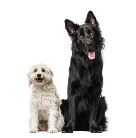 breed: Mixed breed