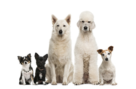 large group of animals: Group of dogs Stock Photo