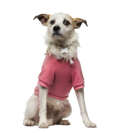 45 years old: Crossbreed dog (4.5 years old) dressed