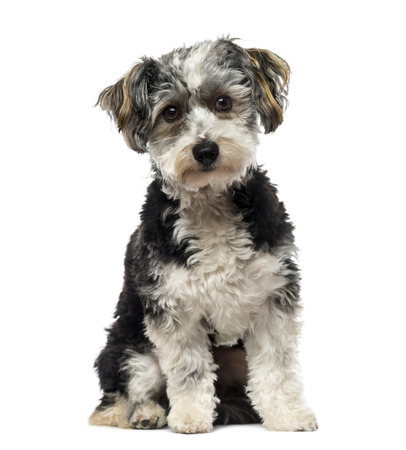 1 year old: Crossbreed dog (1 year old) Stock Photo