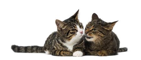 amigos abrazandose: Dos gatitos