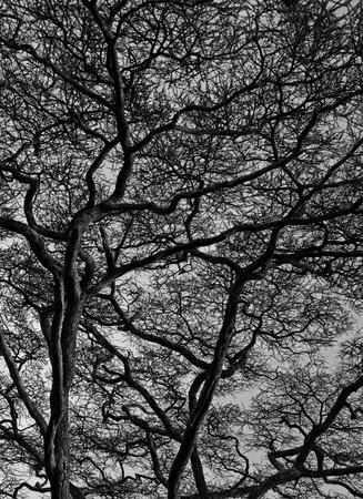 tanzania: View of branches, Serengeti, Tanzania, Africa Stock Photo