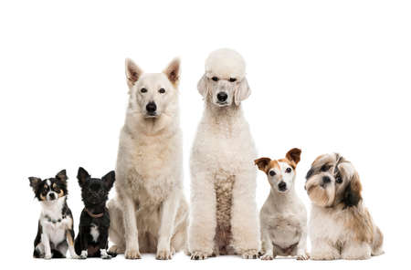 Group of dogs in front of a white background