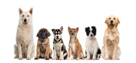 in row: Grupo de perros sentado delante de un fondo blanco Foto de archivo