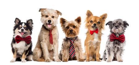 perros vestidos: Grupo de perros delante de un fondo blanco Foto de archivo