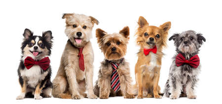 Gruppe Hunde vor einem weißen Hintergrund Lizenzfreie Bilder