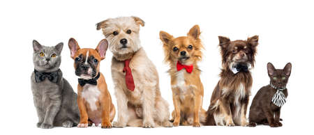 wearing: Group of dogs and cats in front of a white background Stock Photo