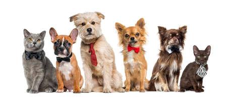 Gruppe von Hunden und Katzen vor einem weißen Hintergrund Standard-Bild