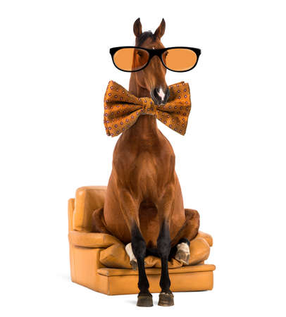 horse collar: Andalusian horse sitting on an armchair, wearing glasses and a bow tie