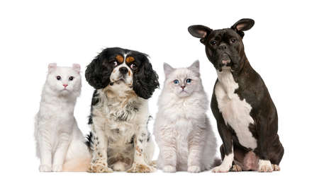white cats: Group of dogs and cats in front of a white background Stock Photo